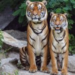 Featuredimage 6 Reasons You Should Protect Wild Animals 150x150 - 6 Reasons You Should Protect Wild Animals