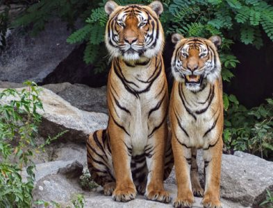 6 Reasons You Should Protect Wild Animals